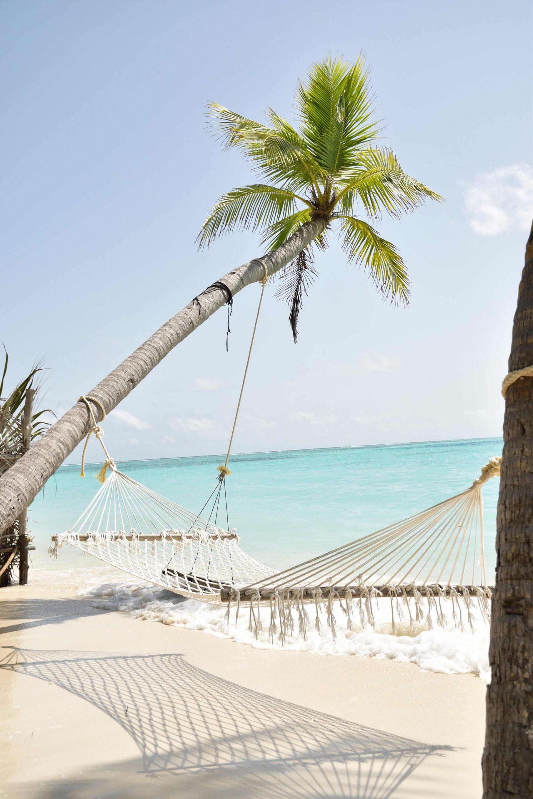 hammock-palmtree